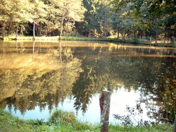 Angelpark Barweiler Mühle - Teich 3